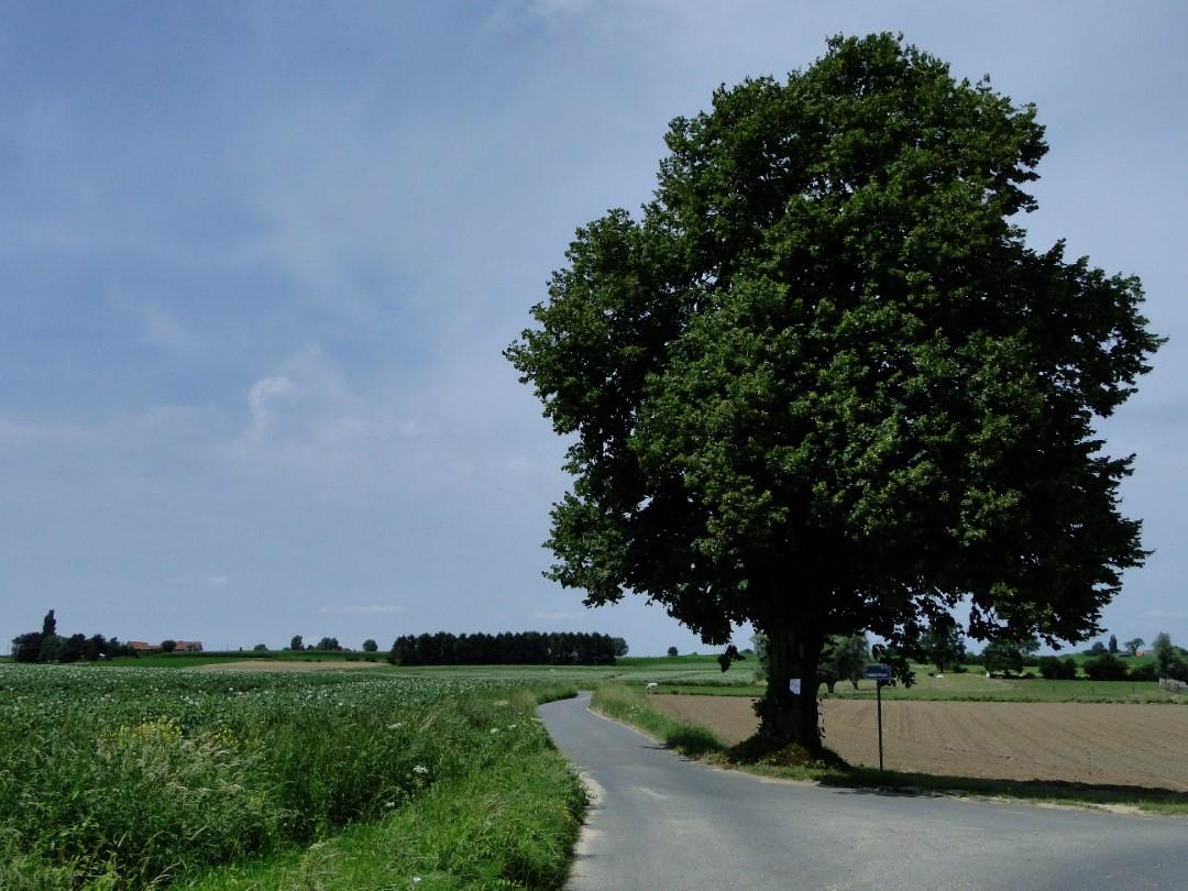 &copy Copyright - vlaanderen-fietsland.be - Luc Demeulenaere (Auteur)